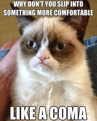 4_funniest_grumpy_cat_memes