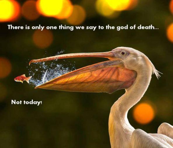braavosi proverb