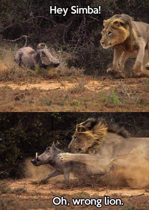 Lion King Real Life
